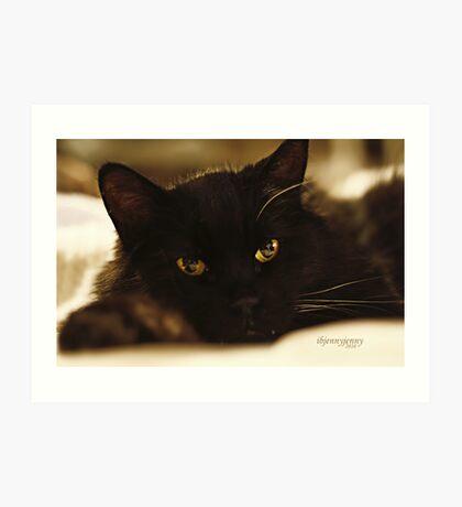 Stray Cat's Prayer..... Art Print