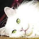 Cat for Beginners by ibjennyjenny