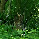 Roe buck deer in the woods by Russell Couch