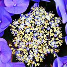 Hydrangea Central by Terri~Lynn Bealle