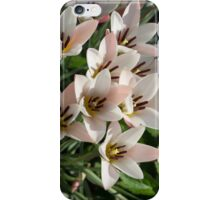 A Bunch of Miniature Tulips Celebrating the Spring Season iPhone Case/Skin