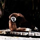 Dream Gibbon Dream by miroslava