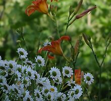Day lilies and Daisies by vigor