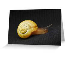 Snail Greeting Card