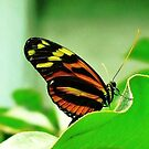 Butterfly from my Daughter by flyfish70