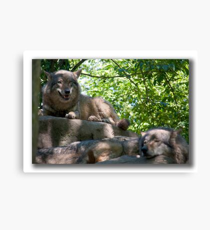 Siesta for Canis Lupus Canvas Print