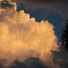 Head in the clouds by robert murray