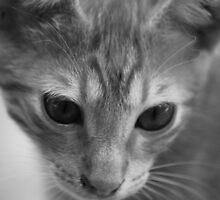 Cat in Crete 2 by SweetLemon