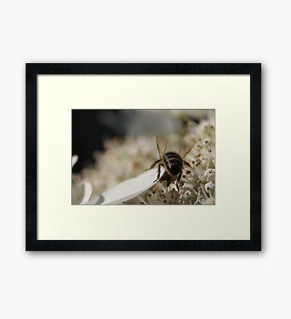 Bum Framed Print