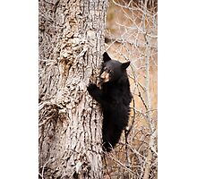 Black Bear Cub Clinging to a Tree Photographic Print