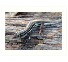 Copper-tailed Skink Art Print