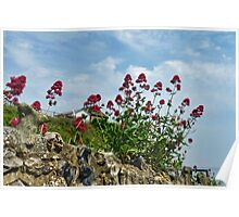 Flowers Growing In Rock Poster