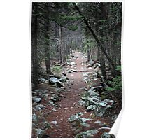 Pine Needle Path Poster