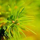 Pine Tree detail by Thomas Tolkien