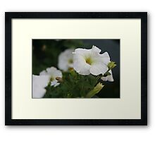 Flower - Home Garden Framed Print