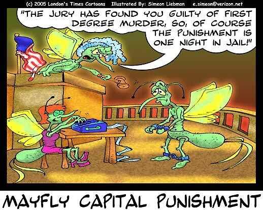 Mayfly Punishment by Londons Times Cartoons by Rick  London