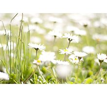 Dreamy Daisies Photographic Print