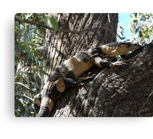 Lace Monitor - Bells Phase Canvas Print