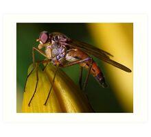 Snipe Fly ! Art Print