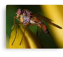 Snipe Fly ! Canvas Print