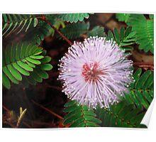 Tiny Little Flower - Macro-Combo Poster