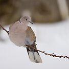Wishing the snow gone by Janika