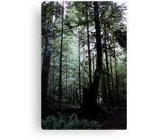 Forest Through the Trees II Canvas Print