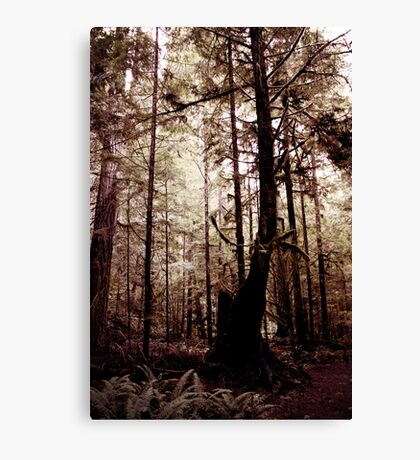 Forest Through the Trees III Canvas Print