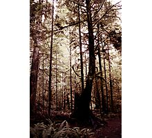 Forest Through the Trees III Photographic Print