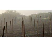 Vineyard-To-Be Photographic Print