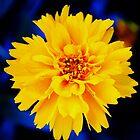 flower power! by startori