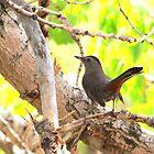 Gray Catbird by Alyce Taylor