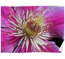 Clematis Centre Poster