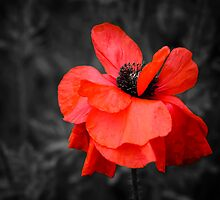 I have a thing for flowers... not very original, I know, but I don't care... This one wore a pretty dress too ;) by Jenny Ryan