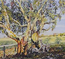 Resting at 'Nunagin' farm in Dumbleyung, Western Australia by scallyart