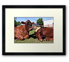 Three Big Mooo Framed Print