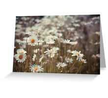 Pushed up daisies Greeting Card