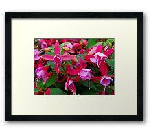 Rose Fantasia Framed Print