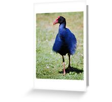 Don't Ruffle My Feathers Again! Greeting Card