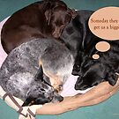 Three In A Bed by David's Photoshop