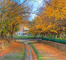 Autumn Leaves in Bendigo by Greg Thomas