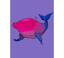 Bisexuwhale - no text Photographic Print