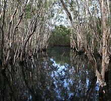 Wetlands, Mackay by lynmel