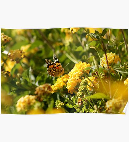 Butterfly on Yellow Lantana 2 Poster
