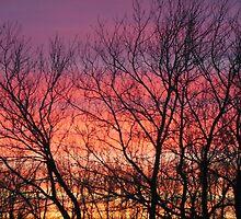 Sensational Sunrise Marching In by kimberlywoyak