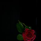 Black Beauty by Jan Clarke