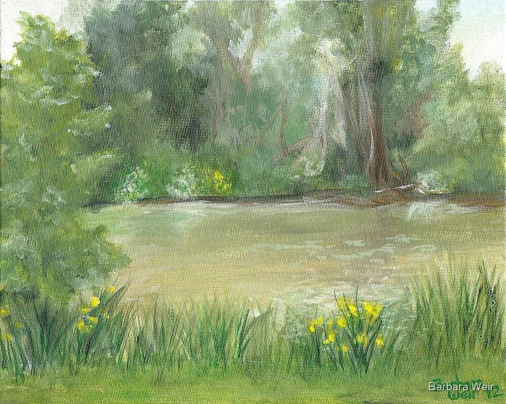 Pond View by Barbara Weir