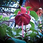 Fuchsia by Tom Newman