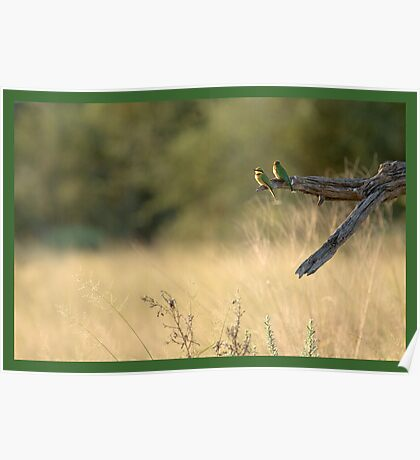 Little bee-eaters Poster