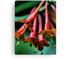Orange Honeysuckle - Afternoon Sun Canvas Print